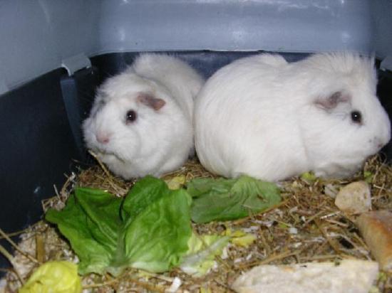 Blanche et Neige